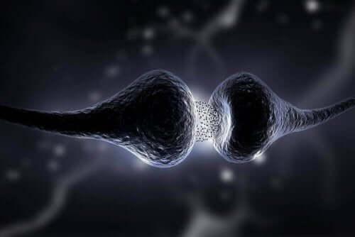 Νευρικές απολήξεις