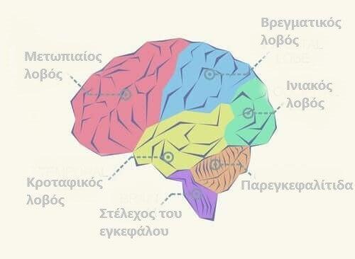 Λοβοί του εγκεφάλου: τι πρέπει να ξέρετε