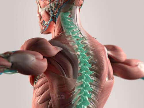 Ψηφιακή απεικόνιση νωτιαίου μυελού