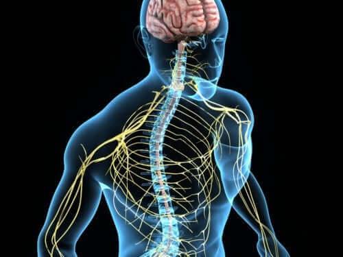 Ψηφιακή απεικόνιση του νευρικού συστήματος