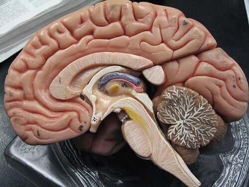 Πλαστικός εγκέφαλος
