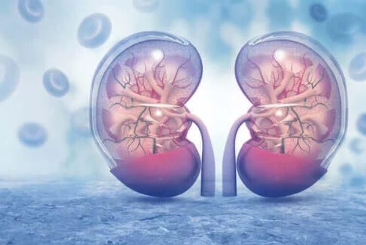 Πώς επηρεάζει ο κορωνοϊός τα νεφρά;