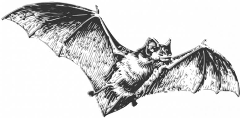 Είναι οι νυχτερίδες η αιτία του κορωνοϊού;