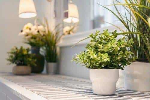 9 συμβουλές για τη φροντίδα των φυτών εσωτερικού χώρου