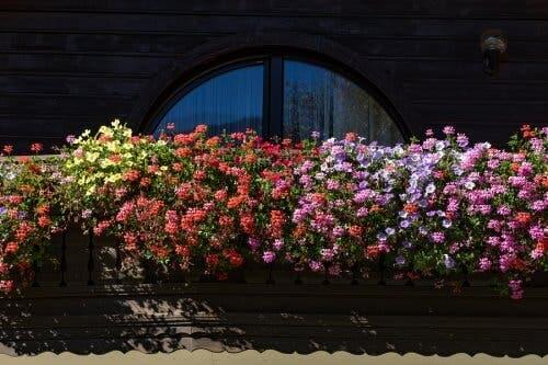 Πέντε αρωματικά λουλούδια για έναν μικρό κήπο