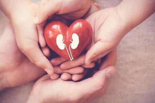 Πώς να βελτιώσετε τη λειτουργία των νεφρών