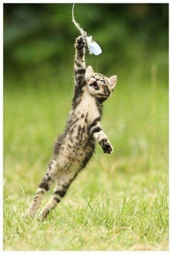 Γατάκι παίζει με καπάκι μπουκαλιού
