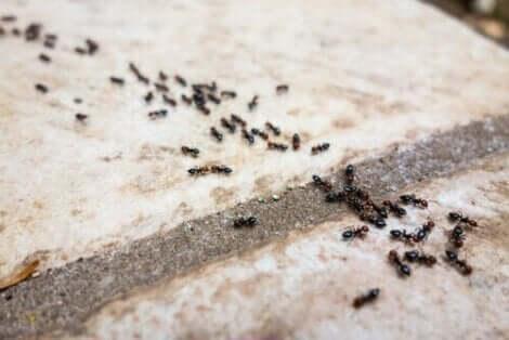 Μια γραμμή από μυρμήγκια