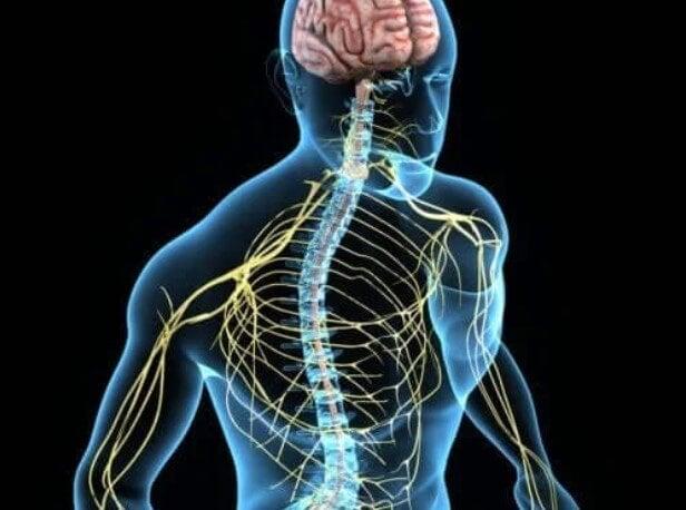 νευρικό σύστημα