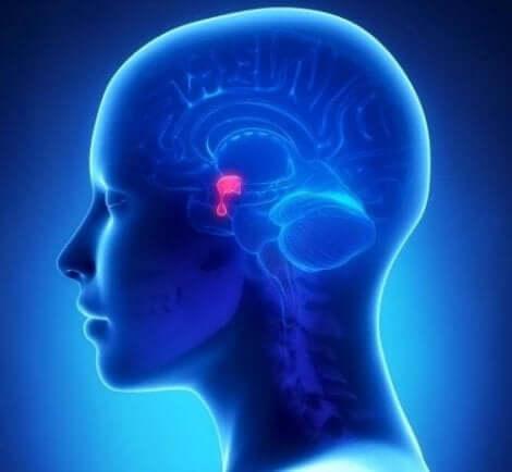 Ψηφιακή αναπαράσταση εγκεφάλου