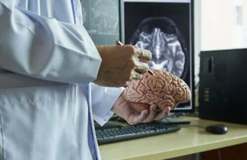 Γιατρός κρατά πλαστικό εγκέφαλο