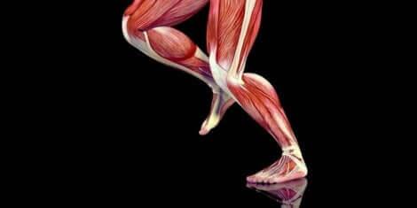 Μύες των ποδιών