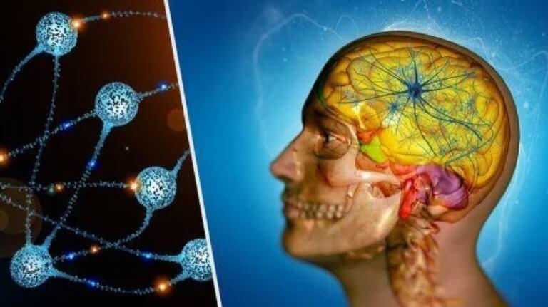 διπλή απεικόνιση εγκεφάλου και ινών