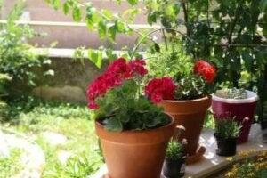 Καλοκαιρινά λουλούδια: Έξι επιλογές για τον κήπο σας