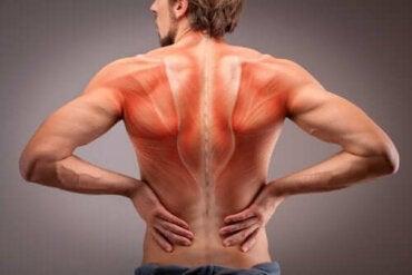 Γνωρίστε την ανατομία των μυών της πλάτης