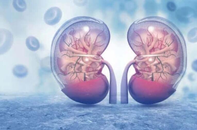 δύο νεφρά