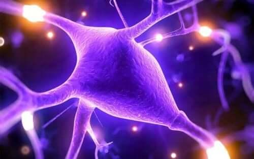 Απεικόνιση νεύρων