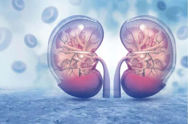 απεικόνιση νεφρών