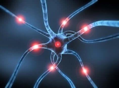 Ψηφιακή απεικόνιση νευροδιαβιβαστών