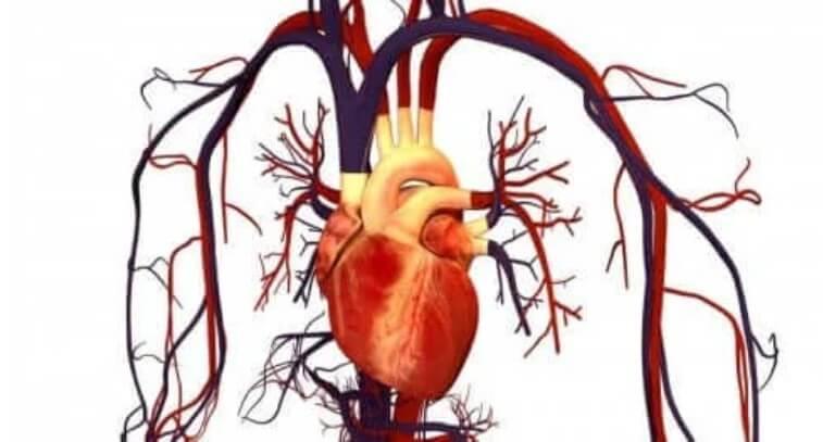 καρδια σε απεικόνιση