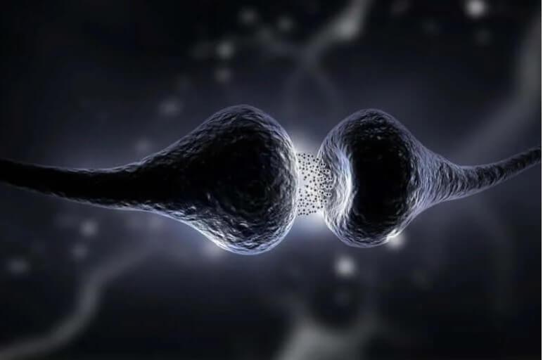 συνάψεις εγκεφάλου