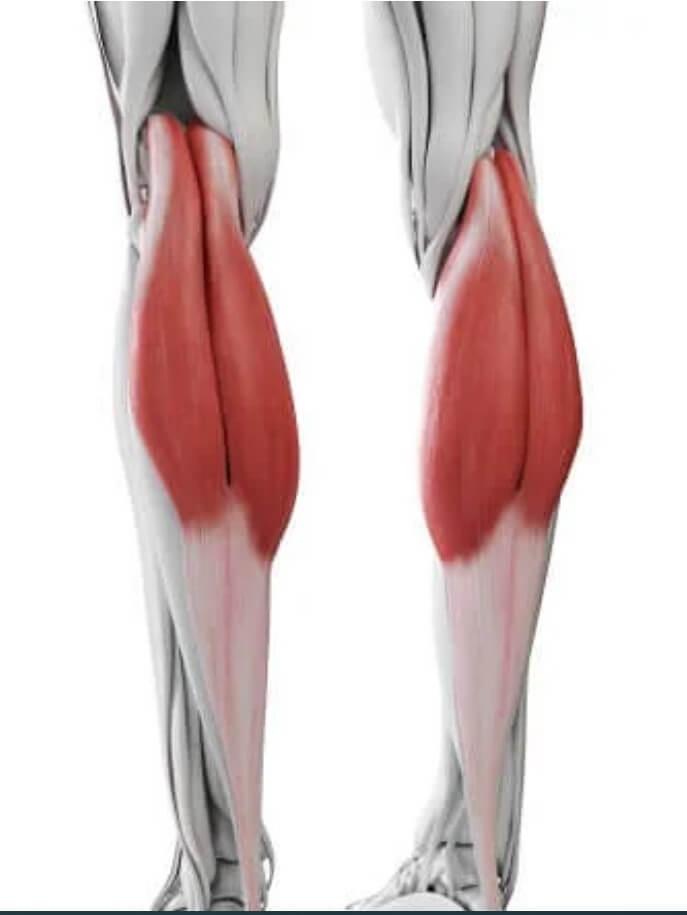 μυς στις γάμπες