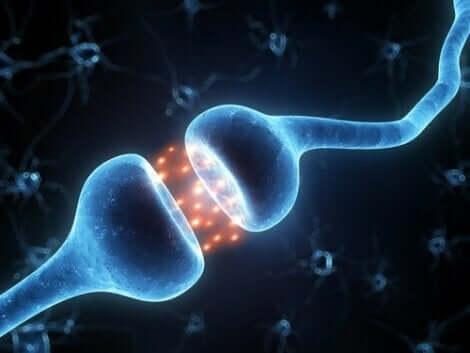 Απεικόνιση νευρώνων που συνδέονται