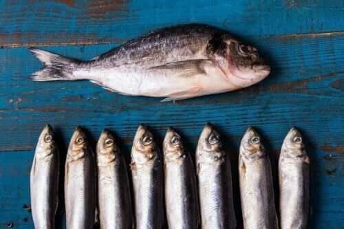Ένα μεγάλο ψάρι και διάφορα μικρά ψάρια υγιεινές τροφές για ηλικιωμένους
