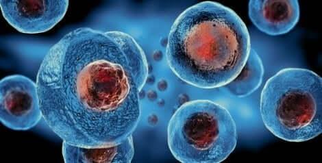 Ιοί κολλημένοι σε κύτταρα