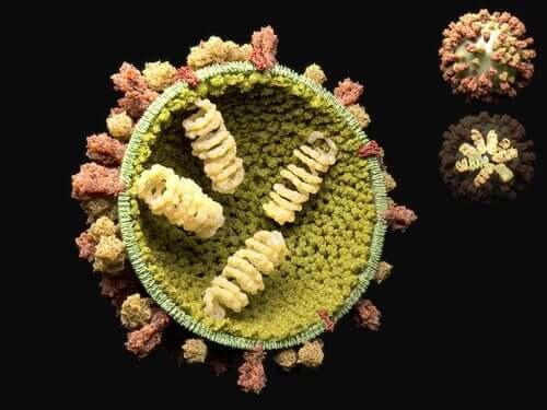 Κύκλος αναπαραγωγής των ιών: Τι είναι