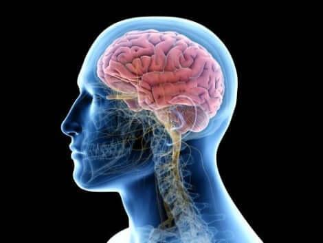 Ψηφιακή απεικόνιση ανθρώπινου εγκεφάλου