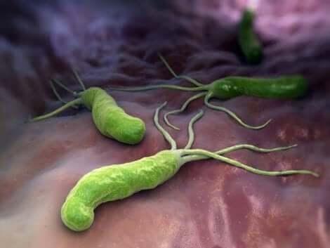 Ψηφιακή απεικόνιση βακτηρίων στο σώμα