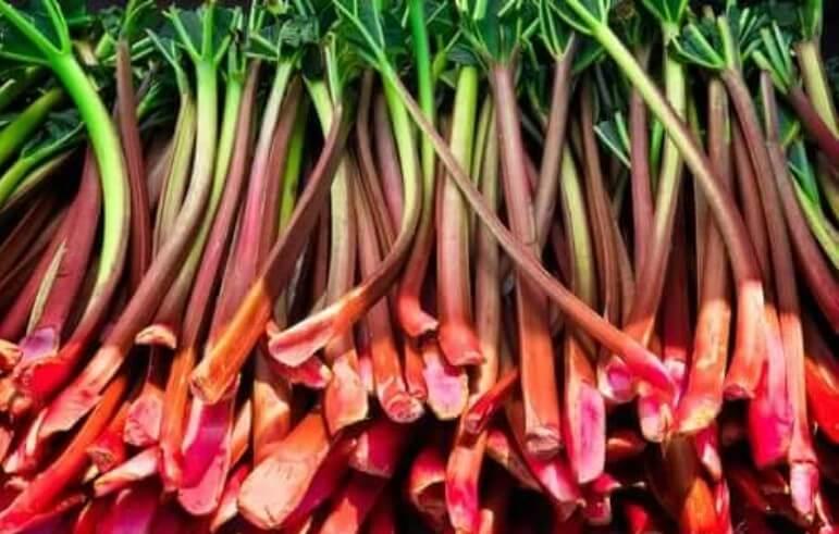 Ραβέντι από τον κήπο σας: Οφέλη και παρενέργειες