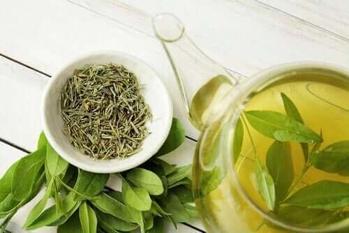 Γνωρίζατε ότι το πράσινο τσάι αυξάνει τη μακροζωία;