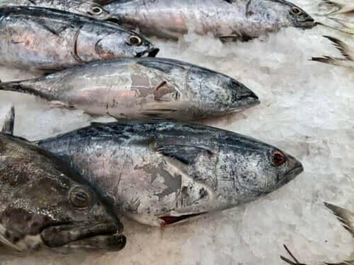 Κατεψυγμένα ψάρια-φαγητό που έχει πέσει κάτω