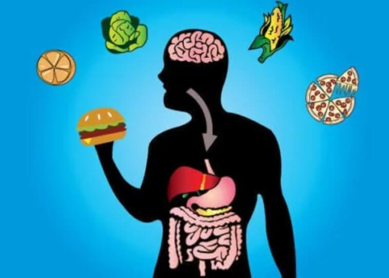μεταβολισμος και junk food