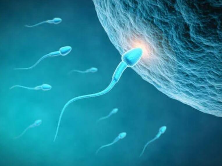 Πώς η διατροφή επηρεάζει την ποιότητα του σπέρματος