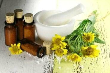 Η χρήση της άρνικας: Τα οφέλη και οι αντενδείξεις