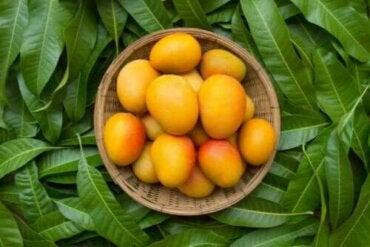 Έξι υγιεινά οφέλη που έχουν τα φύλλα μάνγκο