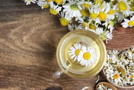 Άνθη και τσάι χαμομηλιού σε τραπέζι
