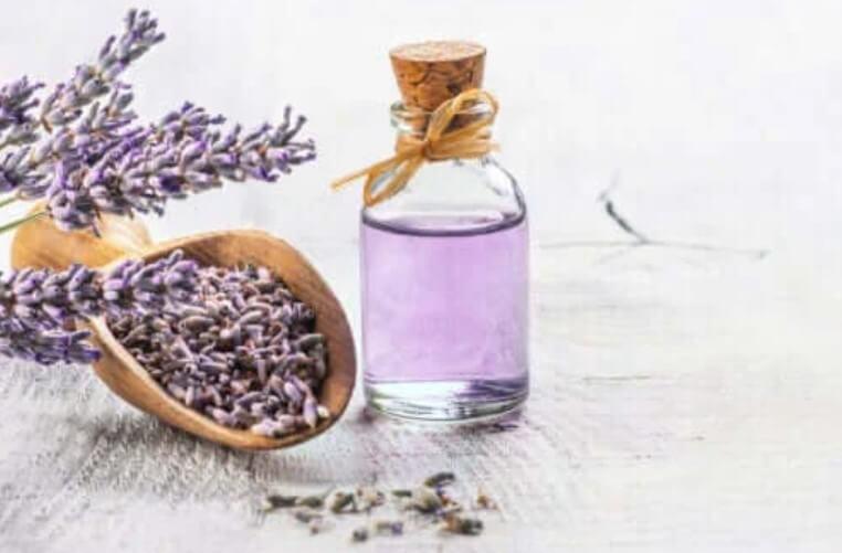 Τα 6 καλύτερα φαρμακευτικά φυτά με επιστημονικές αποδείξεις