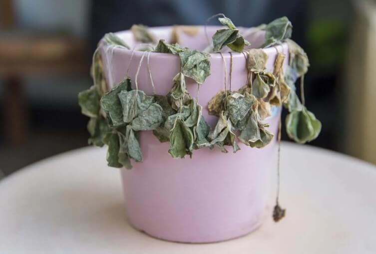 γλάστρα με μαραμένο φυτό