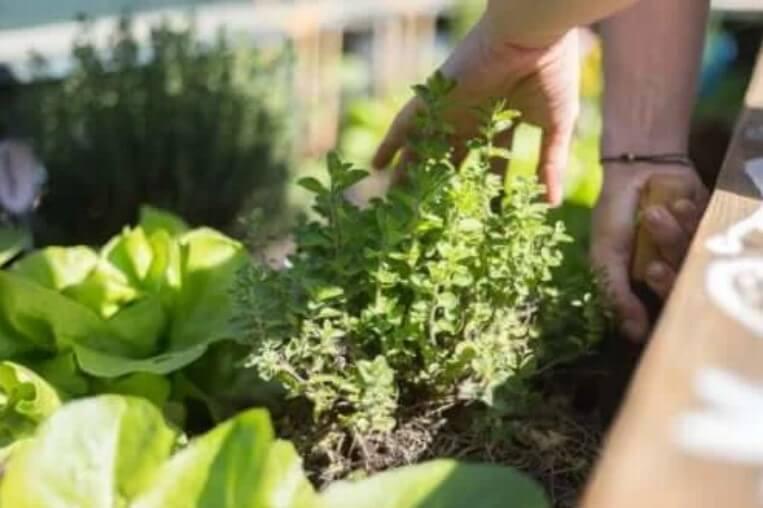 Οι καλύτερες συμβουλές για την κηπουρική στη βεράντα