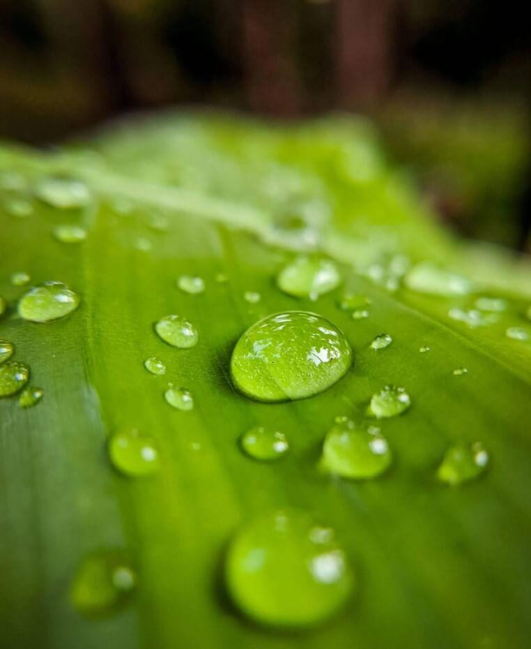 νερό της βροχής
