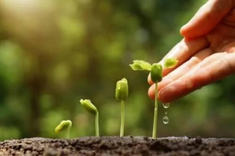 Ανακαλύψτε 6 φανταστικές συμβουλές για έναν βιώσιμο κήπο