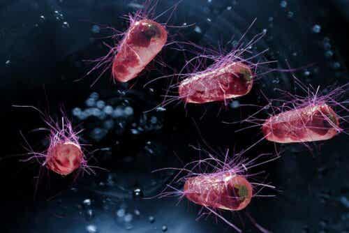 Βακτήρια σε μεγέθυνση