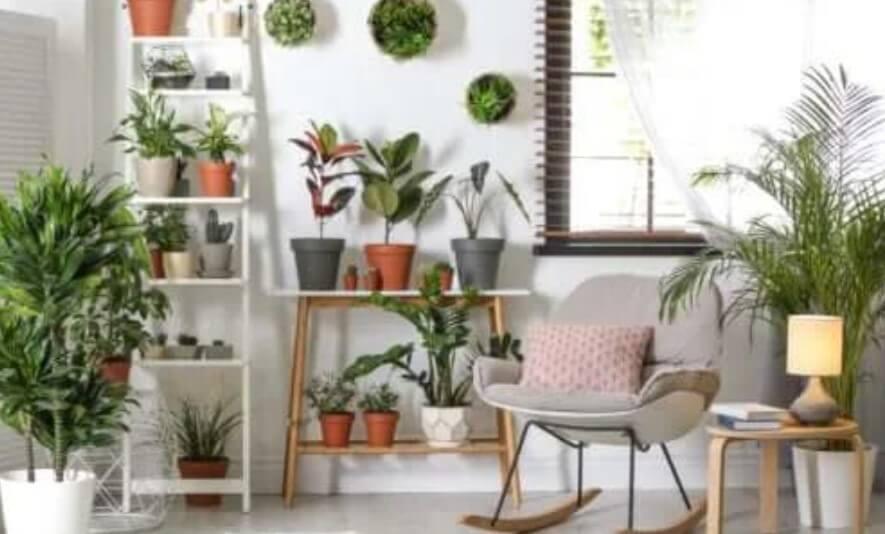 Ανθεκτικά φυτά που δεν απαιτούν πολλή φροντίδα