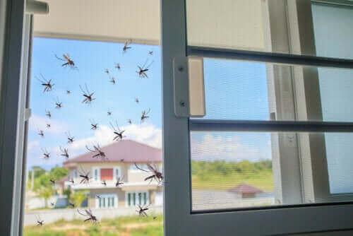 Φυσική θεραπεία με βασιλικό για τα κουνούπια