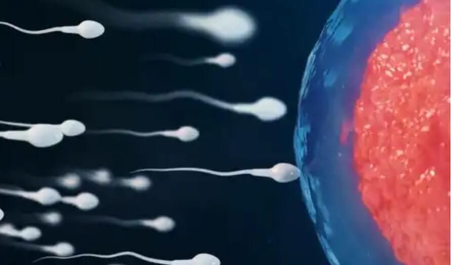 γονιμοποίηση ωαρίου