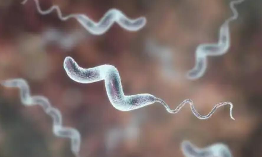 απεικόνιση βακτηρίου